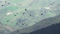 Il volo...  - San mauro castelverde (2834 clic)