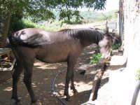 Animali in campagna.  - San pier niceto (3594 clic)
