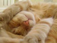 dorme spaparanzato...  - Comiso (5823 clic)