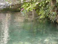 fiume Calcinara  - Pantalica (13327 clic)