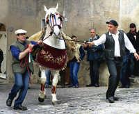 Festa di S.Giuseppe.Il cavallo trasporta un carico di frumento che viene donato alla chiesa.  - Valguarnera caropepe (9899 clic)