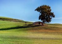 vista della campagna con albero solitario  - Valguarnera caropepe (8696 clic)