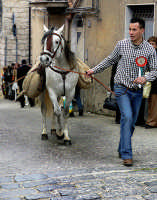 In giro per le strade il giorno di S.Giuseppe  - Valguarnera caropepe (6632 clic)