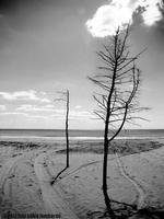 Nuvole Spiaggia di Mollarella  - Licata (4235 clic)