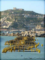 I vivai del porto  - Licata (10026 clic)