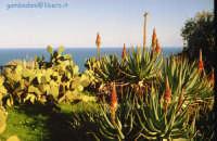 Giardino d'inverno  - Solunto (4359 clic)