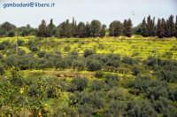 panorama in primavera visto da Cefalà  - Casteldaccia (5024 clic)