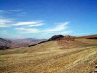 La campagna d'estate  - Montemaggiore belsito (5404 clic)