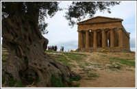 Valle dei templi  - Agrigento (6192 clic)