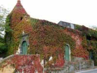 Chiesa di S. Vito. La vite canadese ha assunto i colori dell'autunno. Novembre 2005.   - Viagrande (7610 clic)