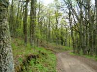 Il suggestivo bosco di Malabotta, sul crinale tra i Peloritani e i Nebrodi.  - Montalbano elicona (10168 clic)