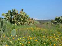 Precoce primavera nelle campagne tra Adrano e il medio corso del Simeto. 19 febbraio2006.  - Adrano (2988 clic)