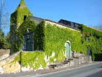Chiesa di S. Vito e vite canadese, aprile 2005  - Viagrande (4387 clic)