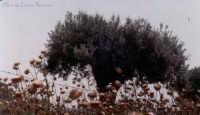 natura morta & natura viva natura morta & natura viva  - Donnafugata (4114 clic)