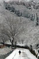 nevicata del 25 gennaio 2006  - Motta d'affermo (6702 clic)