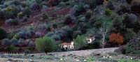 Costruzioni rurali nell'entroterra messinese  - Novara di sicilia (4686 clic)
