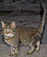 il gatto frittella salvato in extremis oBastiuni dal sottoscritto   - Capo d'orlando (3538 clic)