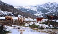 pascolo invernale  - Castel di lucio (8309 clic)