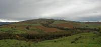 boschetto al bivio per gagliano  - Gagliano castelferrato (3872 clic)