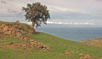 alberi solitari 7  - Motta d'affermo (4426 clic)