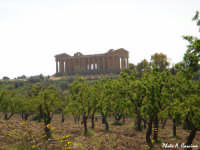Tempio della Concordia - lato nord/ovest  - Valle dei templi (3831 clic)