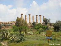 Tempio di Ercole - lato sud/ovest  - Valle dei templi (2975 clic)