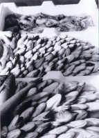 il pesce di sciacca  - Sciacca (2211 clic)