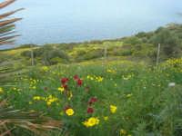 panorama - 19 aprile 2009  - Riserva dello zingaro (2365 clic)