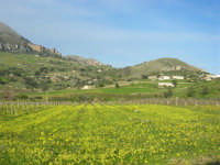 vigneti, in primo piano, e Monte Sparagio - 21 febbraio 2009  - Balata di baida (5041 clic)