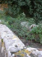 Bosco d'Alcamo - Riserva Naturale Orientata - sul monte Bonifato: La Funtanazza, grande serbatoio pubblico di età medievale - 8 dicembre 2006  - Alcamo (2156 clic)