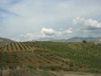 la campagna agrigentina - 9 novembre 2008   - Ribera (2835 clic)