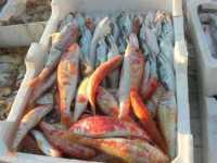 al porto - pesci - 7 dicembre 2009   - Sciacca (5226 clic)