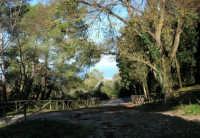 Bosco d'Alcamo - Riserva Naturale Orientata - sul monte Bonifato - 8 dicembre 2006  - Alcamo (1065 clic)