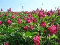 la campagna a primavera - sulla - 3 maggio 2009  - Buseto palizzolo (1812 clic)