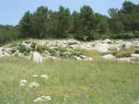 alberi e rocce - 17 maggio 2009  - Calatafimi segesta (1859 clic)