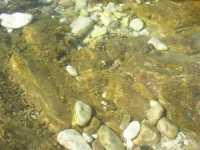 Macari - l'Isulidda - particolare - 15 agosto 2009  - San vito lo capo (2400 clic)