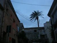 tra le case, una palma - 11 gennaio 2009  - Scopello (3193 clic)