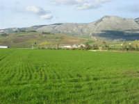 campi di grano, in primo piano, e Monte Sparagio - 21 febbraio 2009  - Balata di baida (4098 clic)