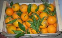 arance brasiliane - 10 dicembre 2008  - Castellammare del golfo (3029 clic)