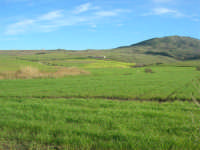 campi di grano, in primo piano, e Monte Sparagio - 21 febbraio 2009  - Balata di baida (4653 clic)