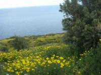 panorama - 19 aprile 2009  - Riserva dello zingaro (2473 clic)