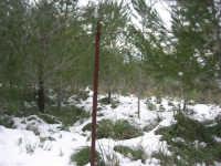 neve sul monte Bonifato - 15 febbraio 2009     - Alcamo (3067 clic)