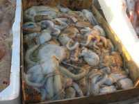 al porto - pesci - 7 dicembre 2009   - Sciacca (4175 clic)