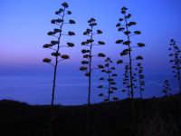 vista sul mare a sera - 12 luglio 2008   - Balestrate (1302 clic)