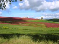 i colori della campagna a primavera - 25 aprile 2008  - Camporeale (2732 clic)