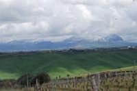 montagne innevate ad est - 13 febbraio 2009   - Alcamo (2745 clic)