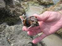 Golfo del Cofano - conchiglia - 29 agosto 2009  - San vito lo capo (2065 clic)