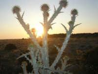 tramonto - 27 aprile 2008  - San vito lo capo (523 clic)
