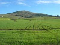 campi di grano - 21 febbraio 2009  - Balata di baida (4552 clic)