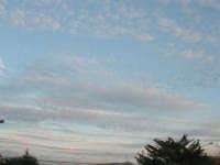 stormo di uccelli in volo - 3 febbraio 2008  - Alcamo (719 clic)
